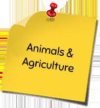 Animals & Agriculture
